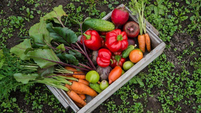 plantar o próprio alimento