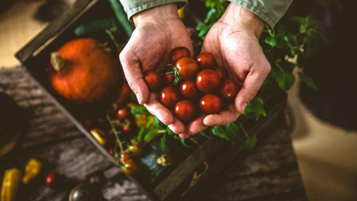 diferença entre produção orgânica e agroecológica